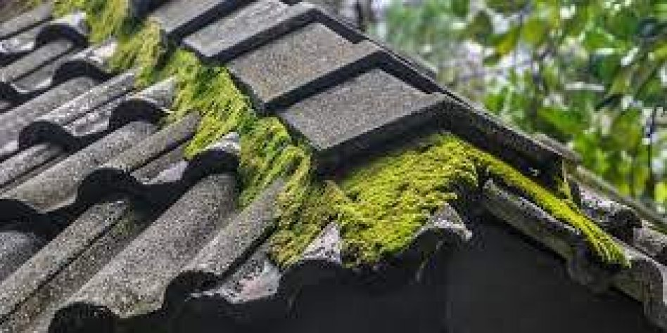 Find out Roof Cleaning Companies in Miami